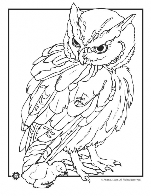 578x748 500 Best Birds, Insects Etc. Coloring Pages Images