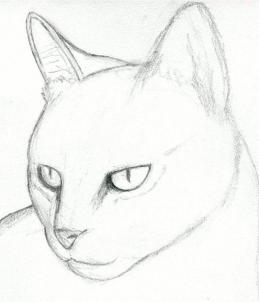 259x302 How To Draw A Cat Head, Draw A Realistic Cat, Step By Step, Pets