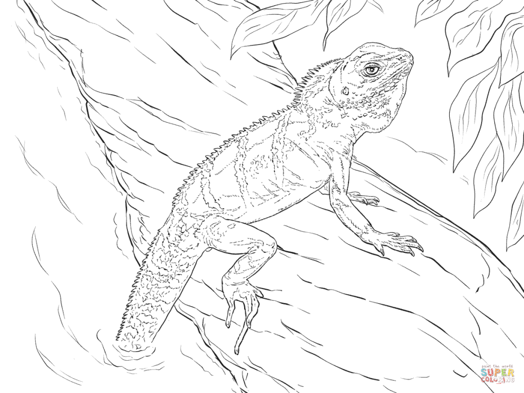 1024x768 Realistic Chinese Water Dragon Download Coloring Pages