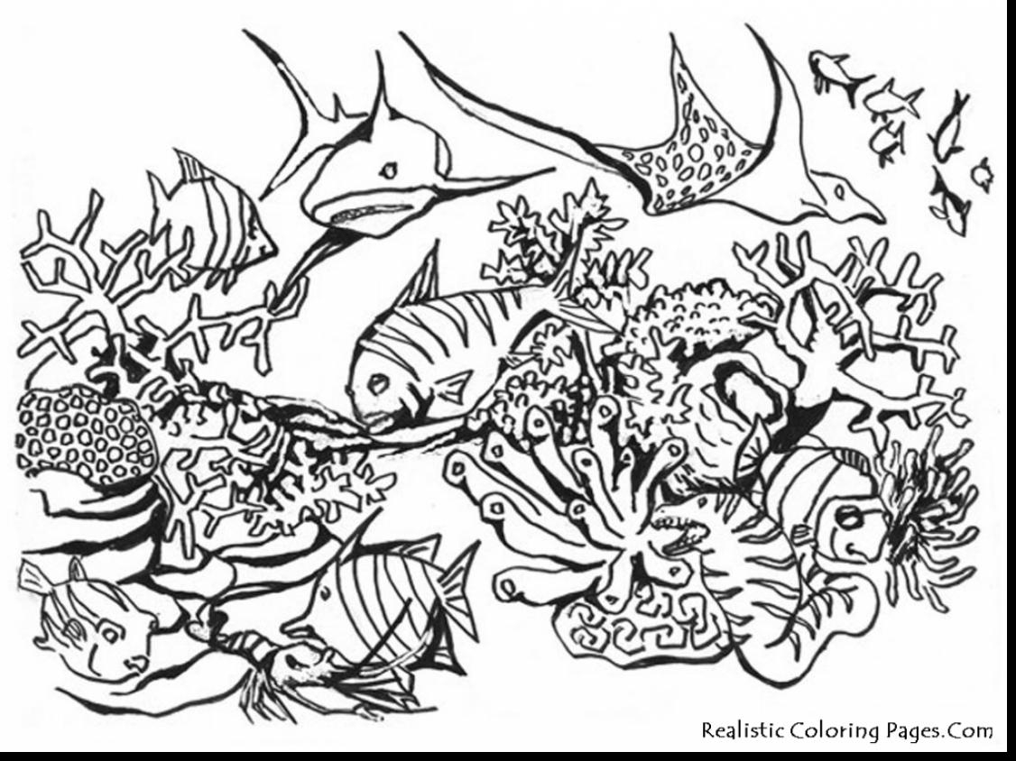 1126x844 Realistic Sea Animals Coloring Pages