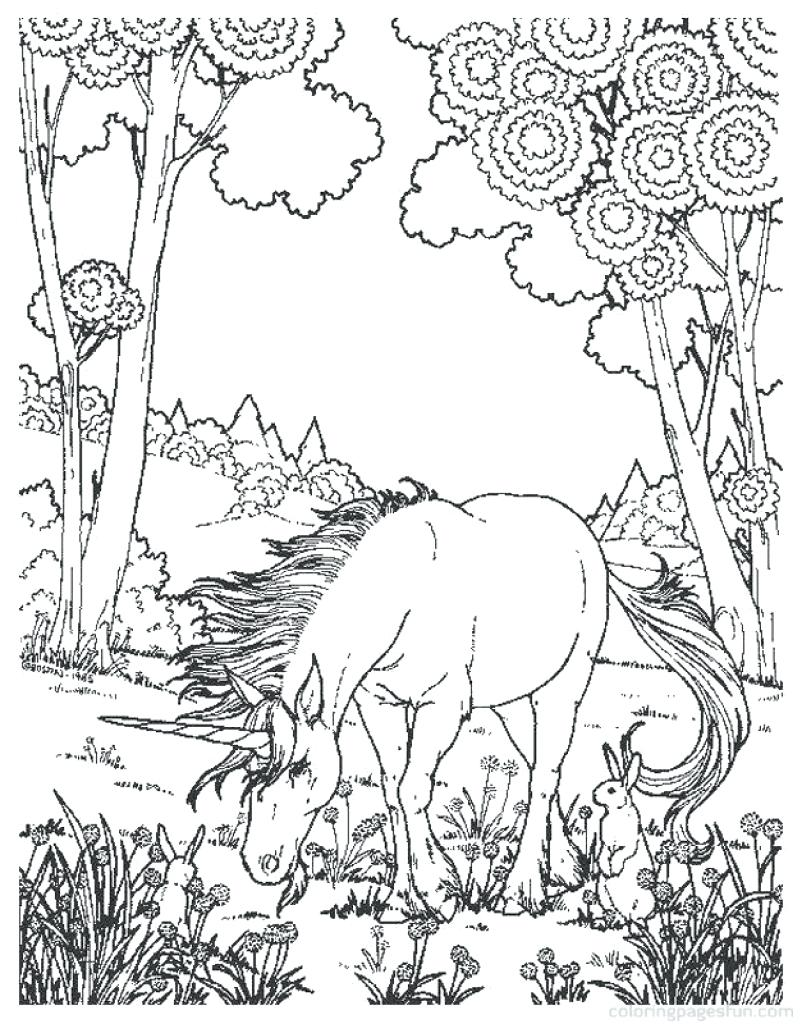 802x1024 Coloring Coloring Pages Animals Realistic
