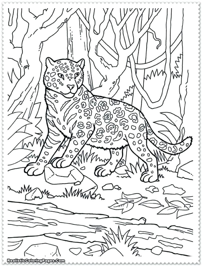 810x1066 Coloring Coloring Pages Jungle Animals Full Size Of With Animal
