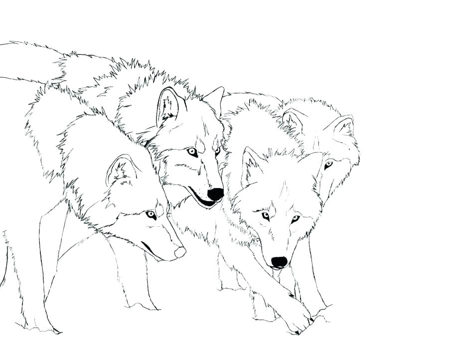 921x704 Top Rated Wolf Coloring Page Images Babies Wolf Coloring Page
