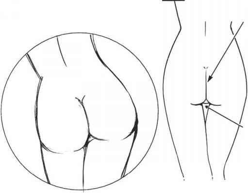 511x399 The Buttocks