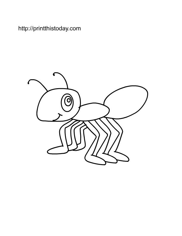 612x792 ant