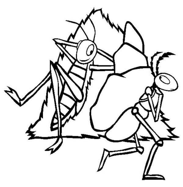 Ant Line Drawing at GetDrawings.com   Free for personal use Ant Line ...