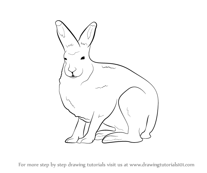 714x596 Learn How To Draw A Arctic Hare (Antarctic Animals) Step By Step