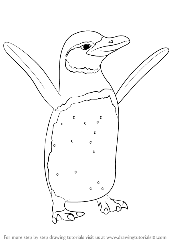 598x844 Learn How To Draw A Galapagos Penguin (Antarctic Animals) Step By