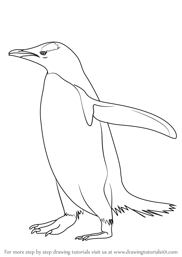 598x844 Learn How To Draw A Gentoo Penguin (Antarctic Animals) Step By