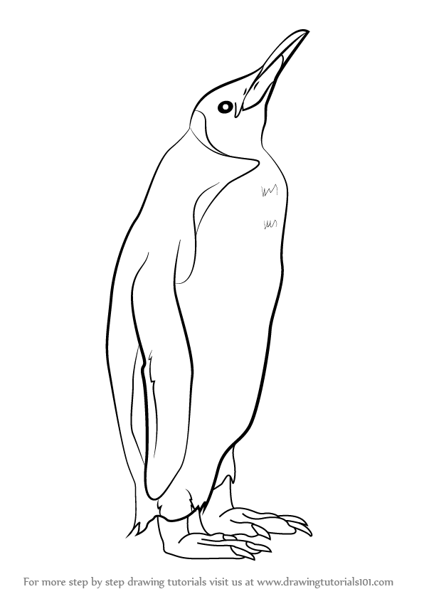 596x842 Learn How To Draw A King Penguin (Antarctic Animals) Step By Step