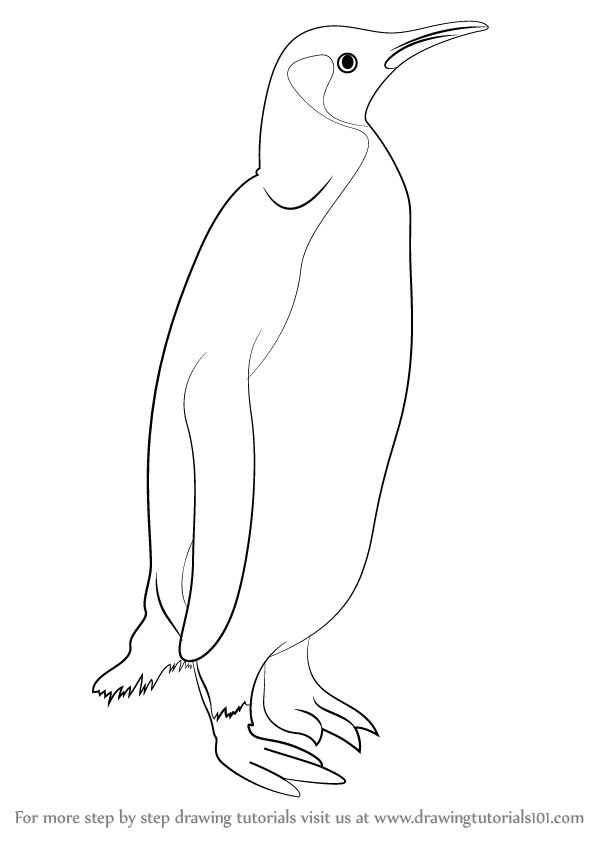 594x844 Learn How To Draw A Penguin (Antarctic Animals) Step By Step