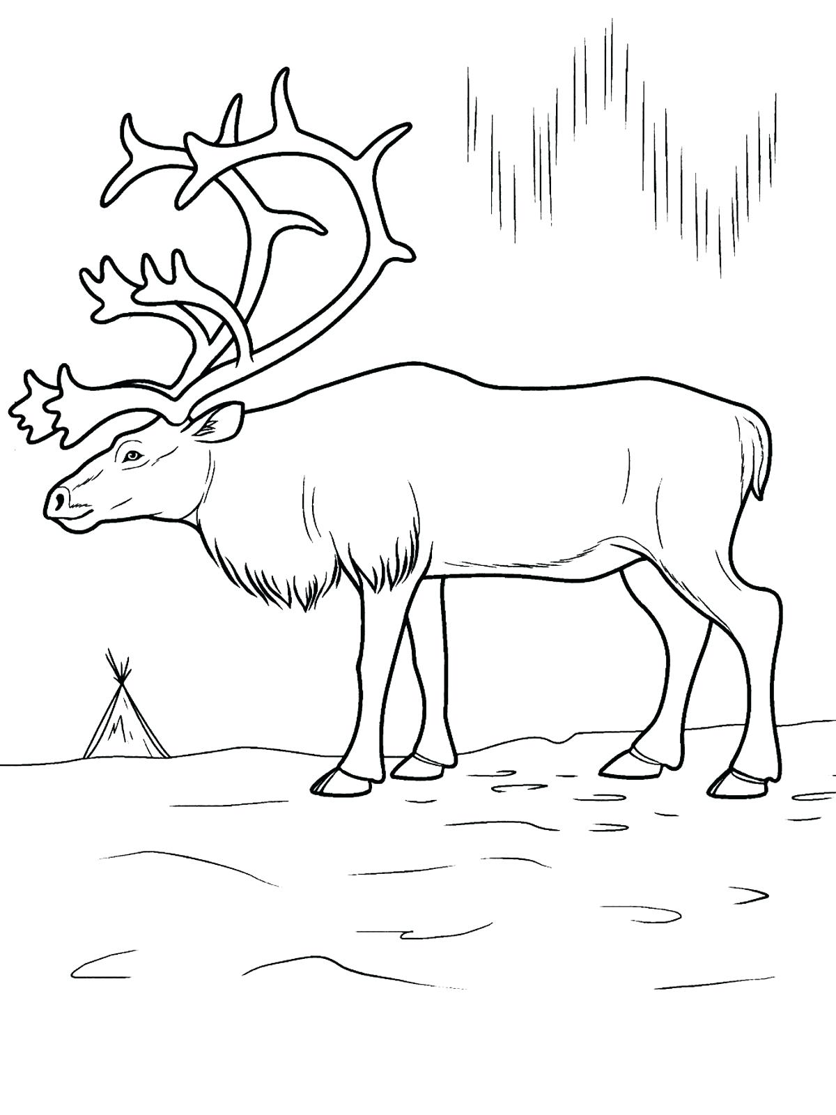1200x1600 Coloring Antarctica Coloring Pages