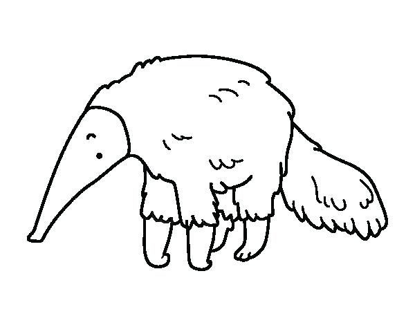 600x470 Anteater Coloring Page Drawing Best