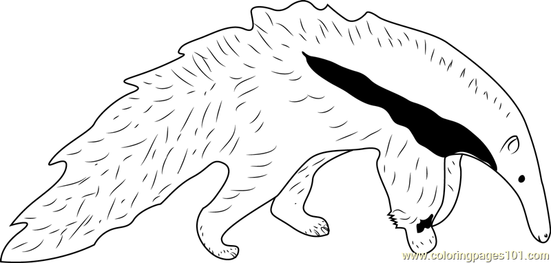 800x382 Young Giant Anteater White Black Coloring Page