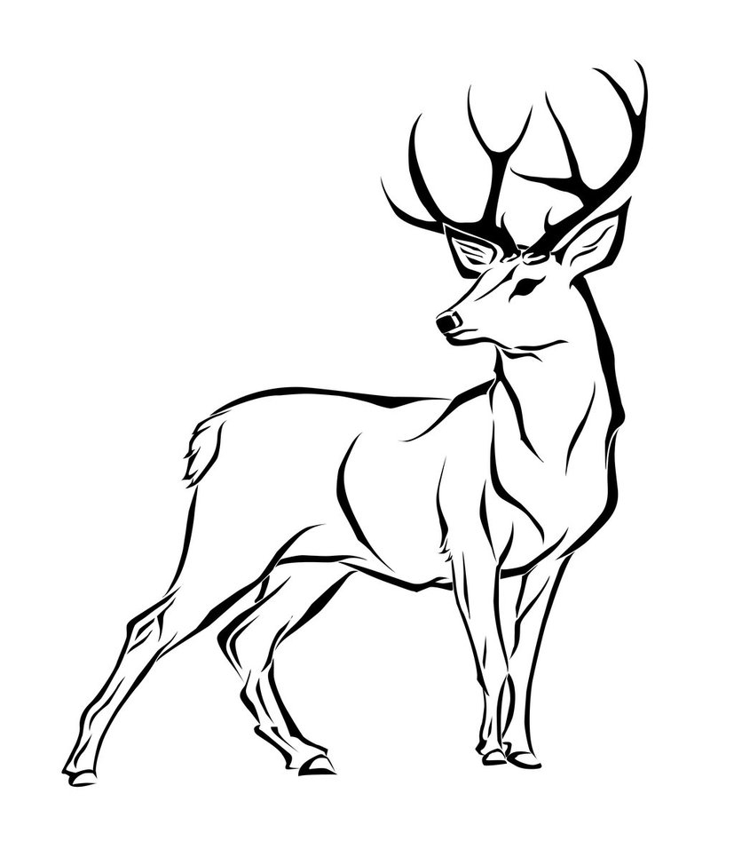 Deer Contour Line Drawing : Antler drawing at getdrawings free for personal use