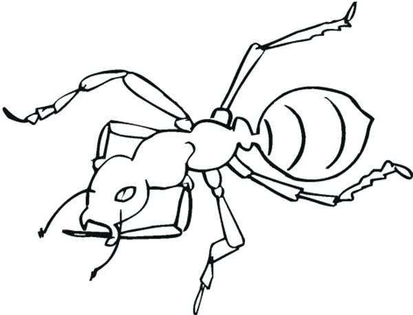 600x458 Ant Coloring Page Awesome Worker Ant Coloring Page Ant Bully