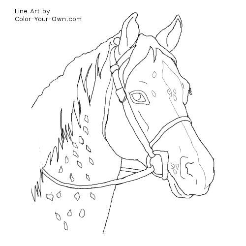Appaloosa Horse Drawing