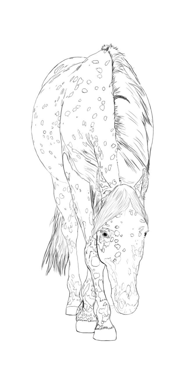 626x1275 Appaloosa Horse Line Art By Stormsdestiny