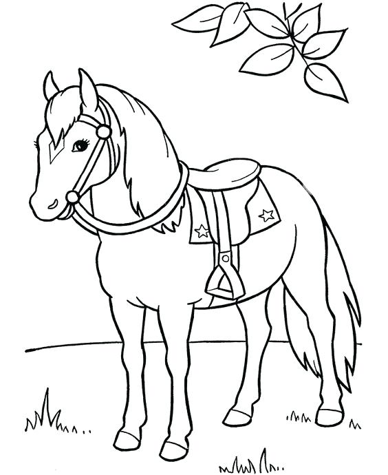 564x690 Elegant Printable Horse Coloring Pages For Appaloosa Horse