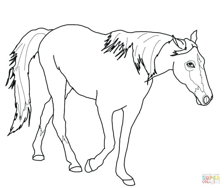 765x645 Epic Quarter Horse Coloring Pages New Images For Gt Appaloosa