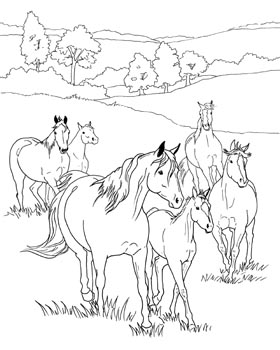 280x350 Horse Coloring Pages Appaloosa Horse