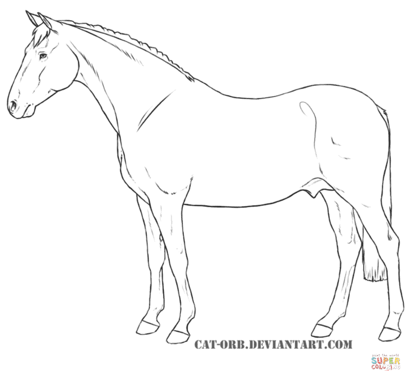Appaloosa horse drawing at free for for Quarter horse coloring pages