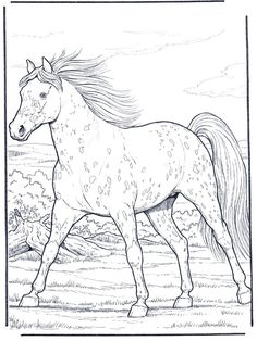 236x314 More Of My Artgtgtappaloosa Horse Line Art By Stormsdestiny