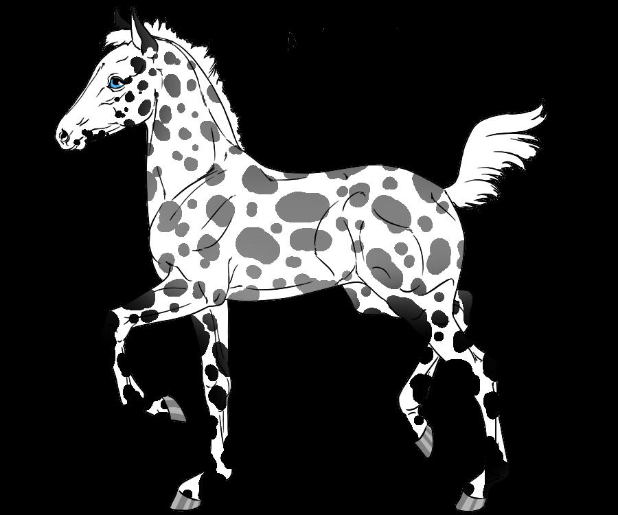 900x750 Appaloosa Horse