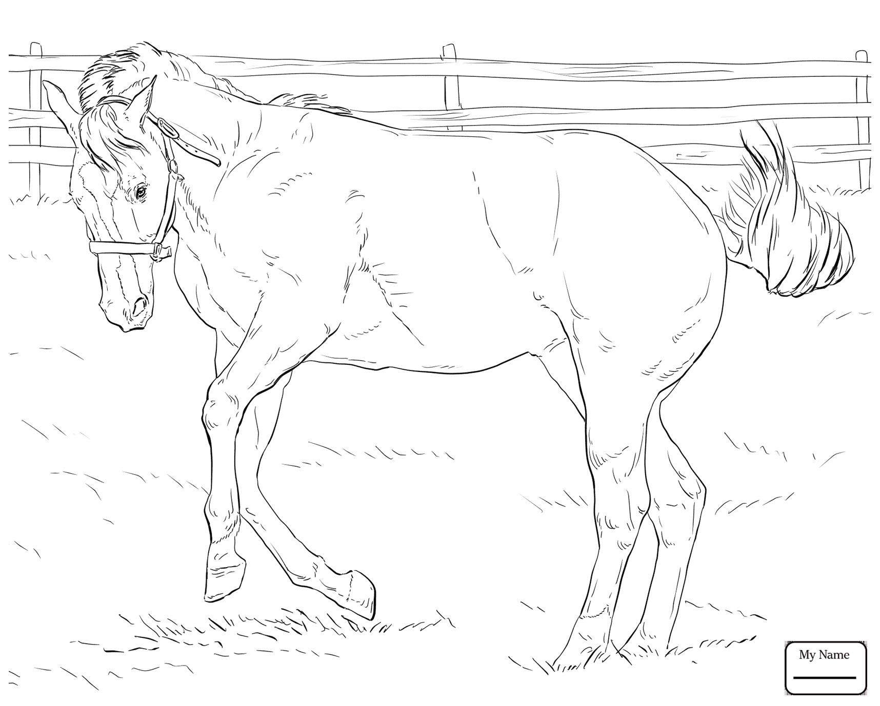 1716x1378 Horses