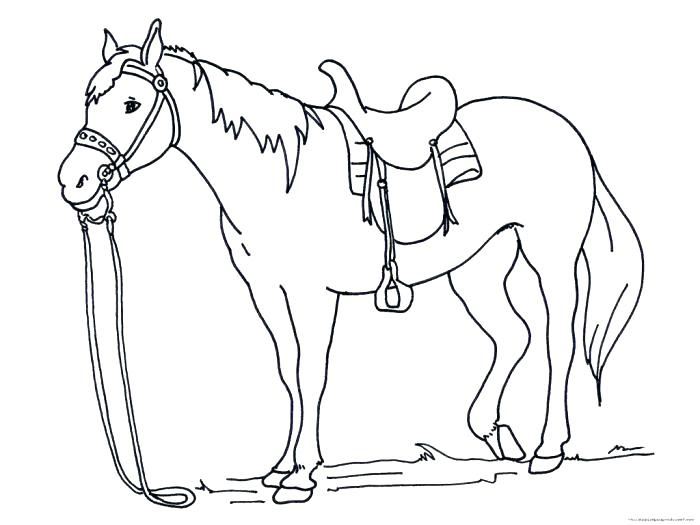 700x525 This Is Coloring Pages Horses Images
