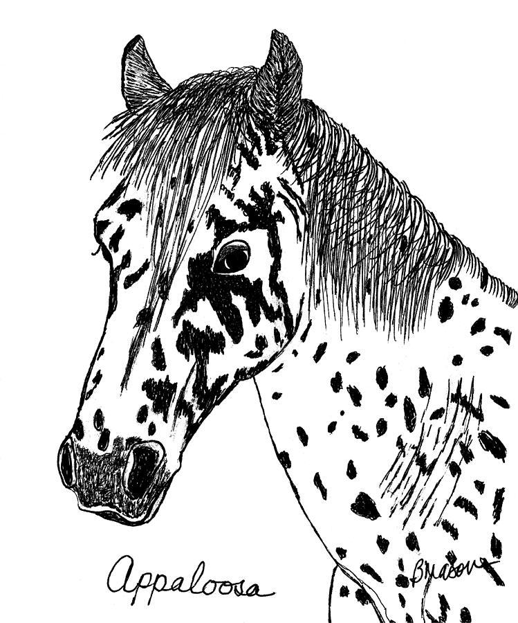 749x900 Appaloosa Drawing By Becky Mason