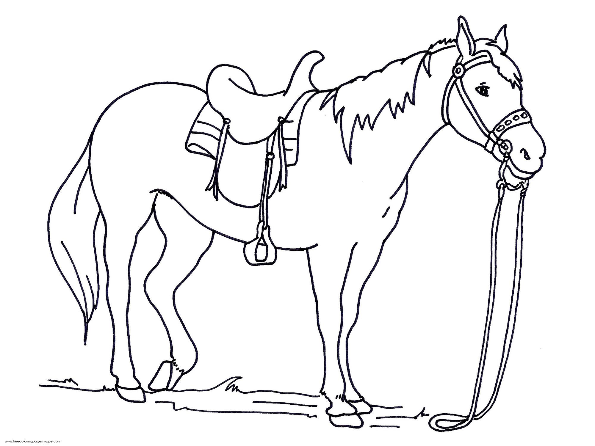 Appaloosa Horse Drawing at GetDrawings