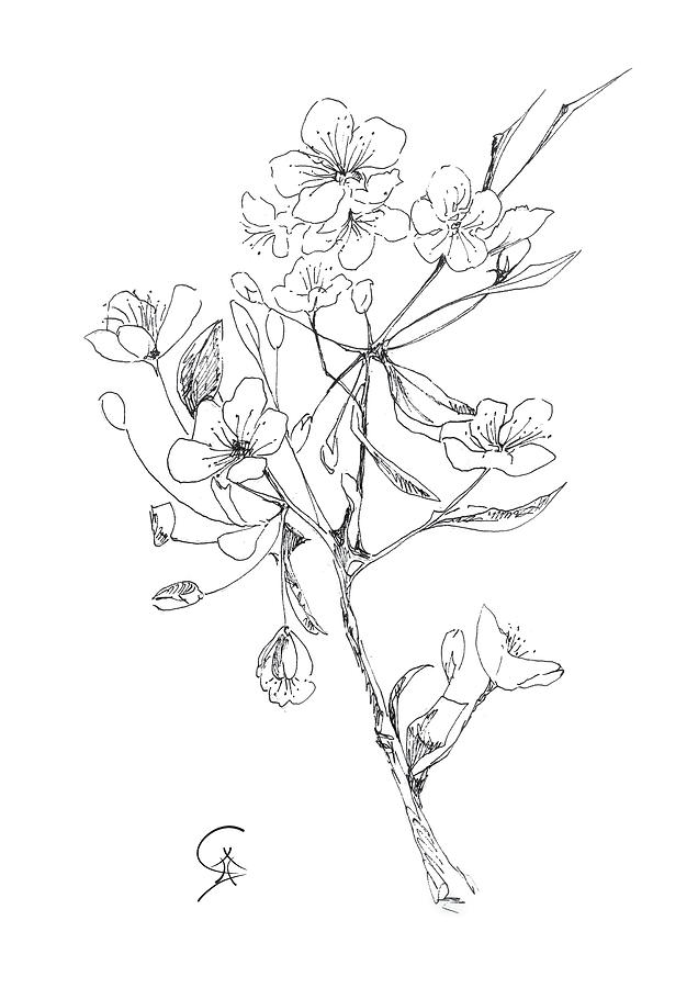 636x900 Blossoming