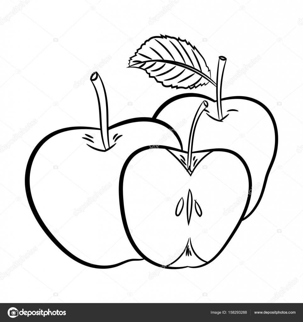 963x1024 Line Drawing Of Apples Simple Line Vector Stock Vector