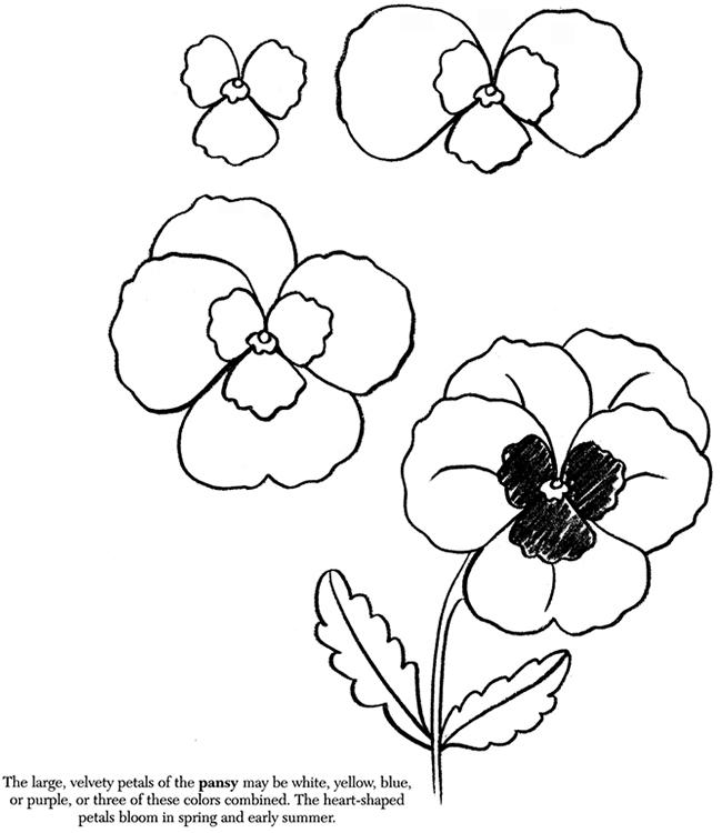 650x750 Pansy Drawing Plants Draw An Apple Draw A Daffodil Draw A Leaf