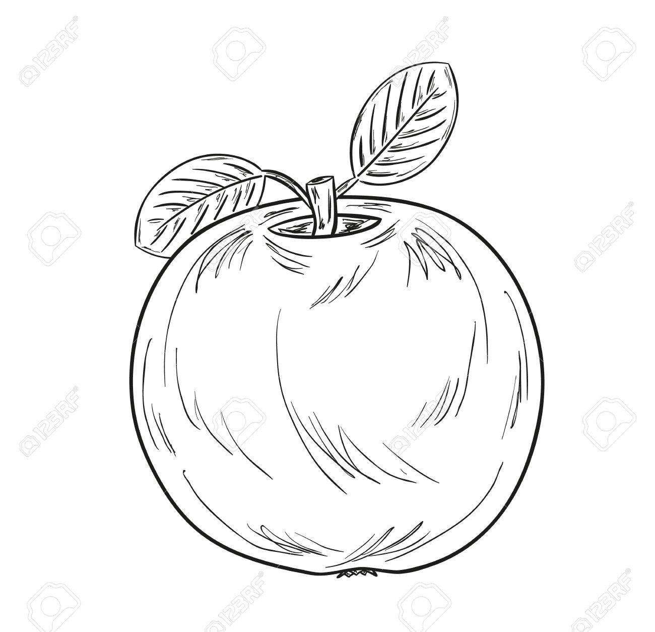 1300x1253 Sketch Of The Apple With Leaves On White Background Royalty Free