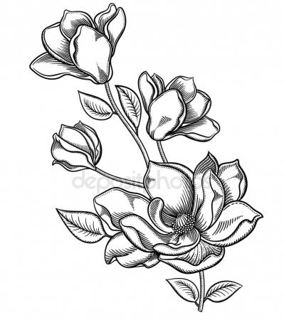 399x450 Blooming Apple Tree Flowers,detailed Hand Drawn Branch Of Apple