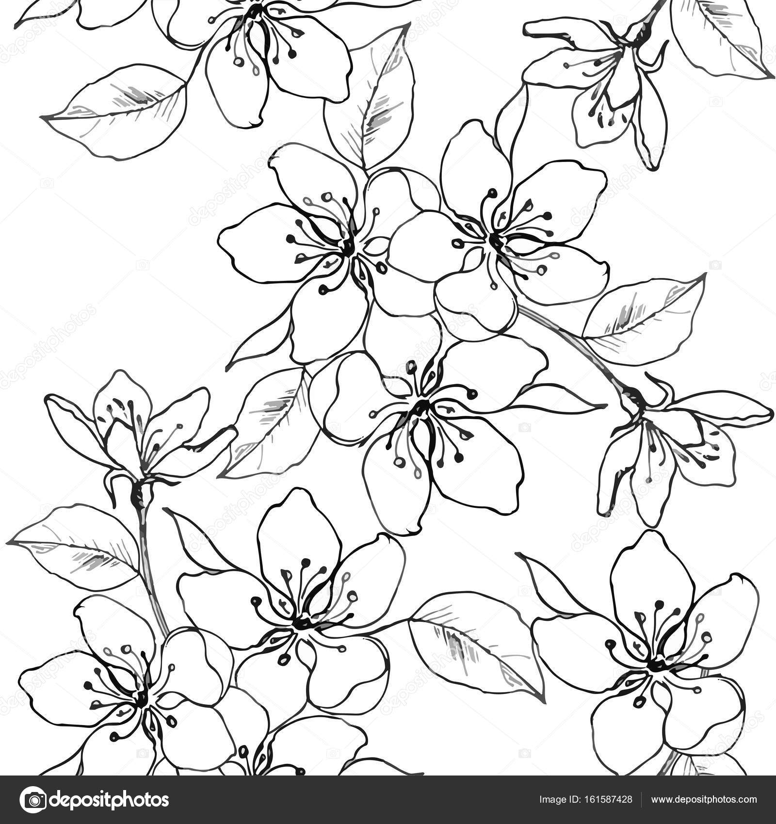 1600x1699 Drawing Hands A Branch Of Cherry Blossom, Pear, Apple. Vector