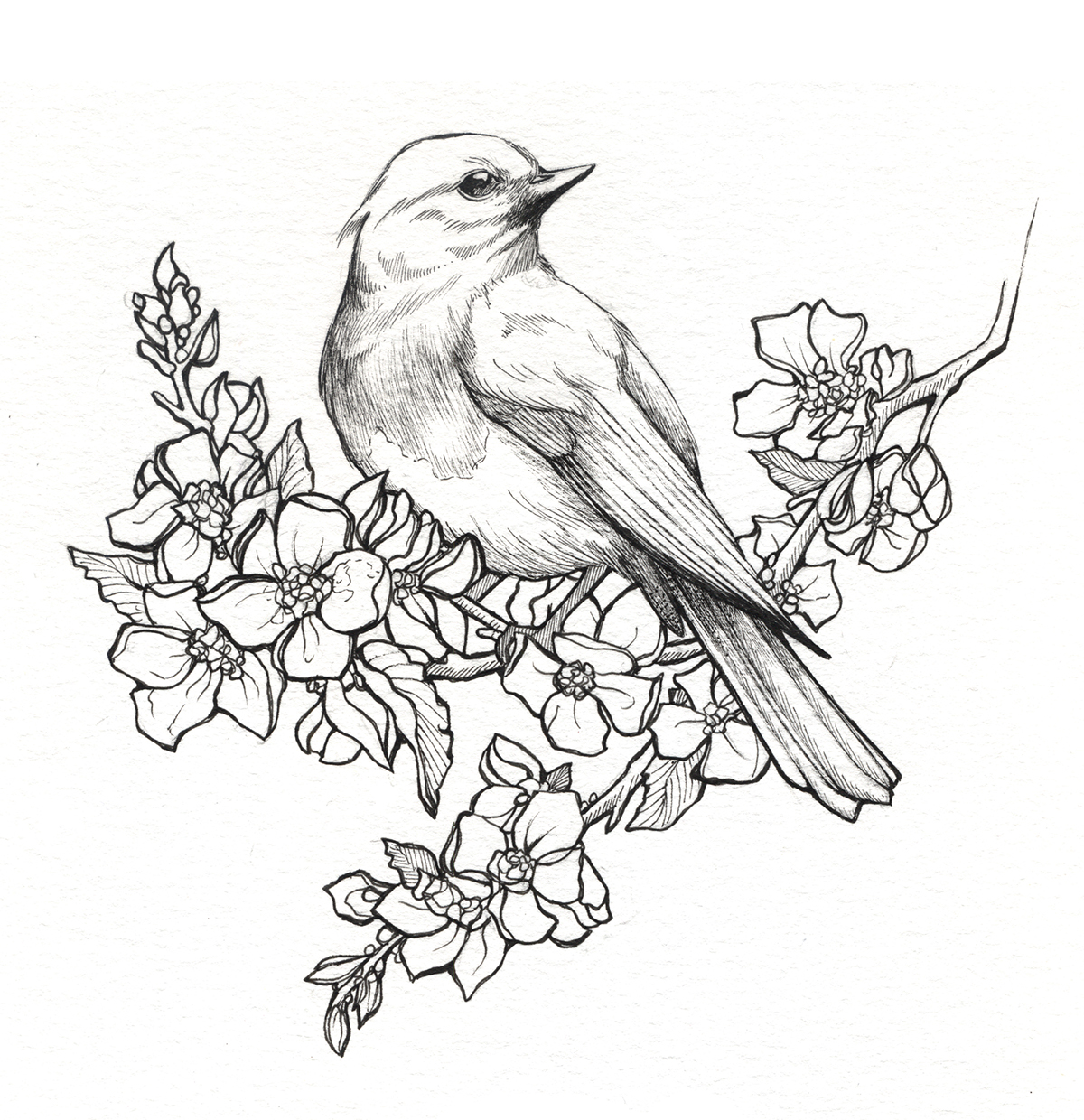 1200x1240 State Birds Amp Flowers On Behance
