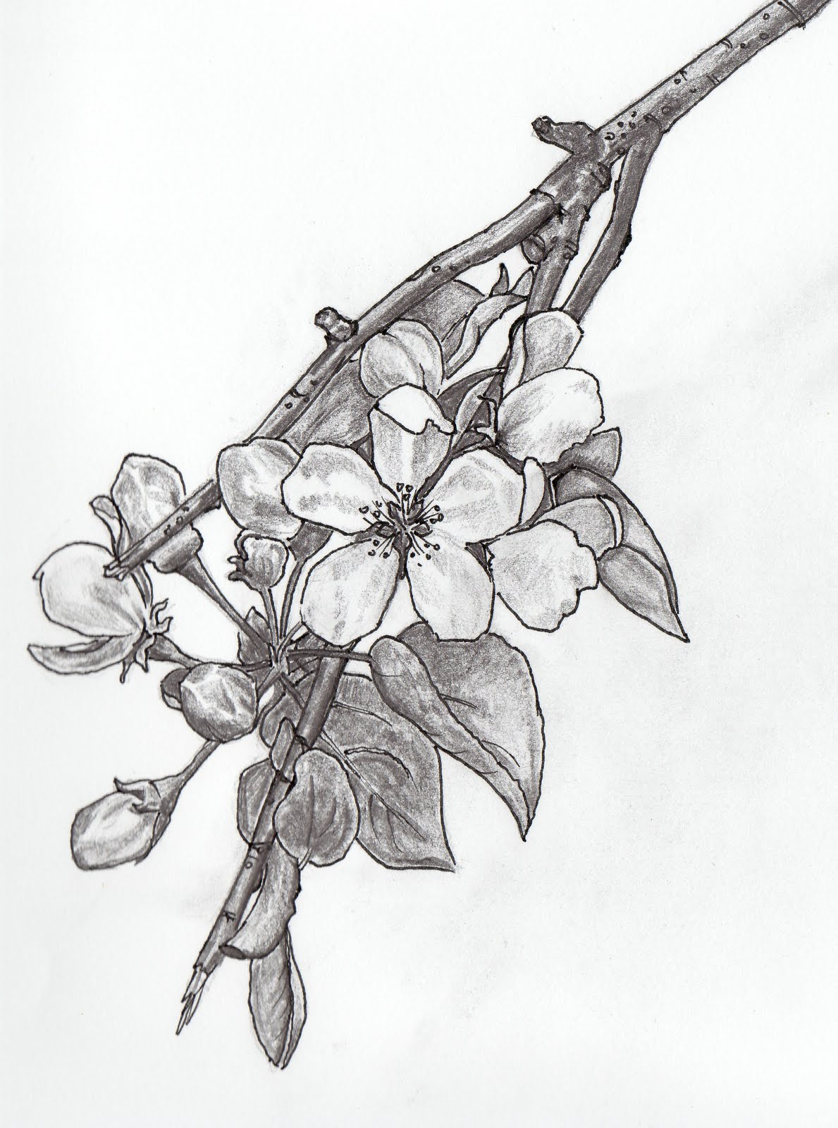 1189x1600 This Is An Apple Blossom, Which Means Promise. I'D Get This