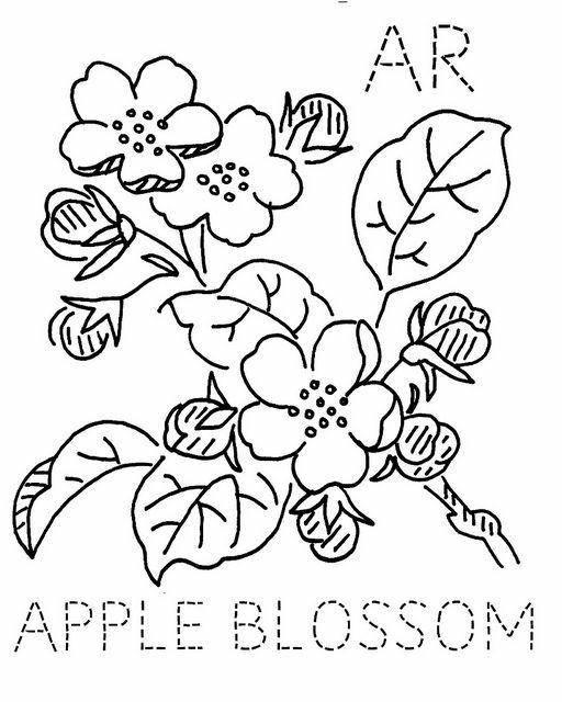 apple blossom drawing at getdrawings com