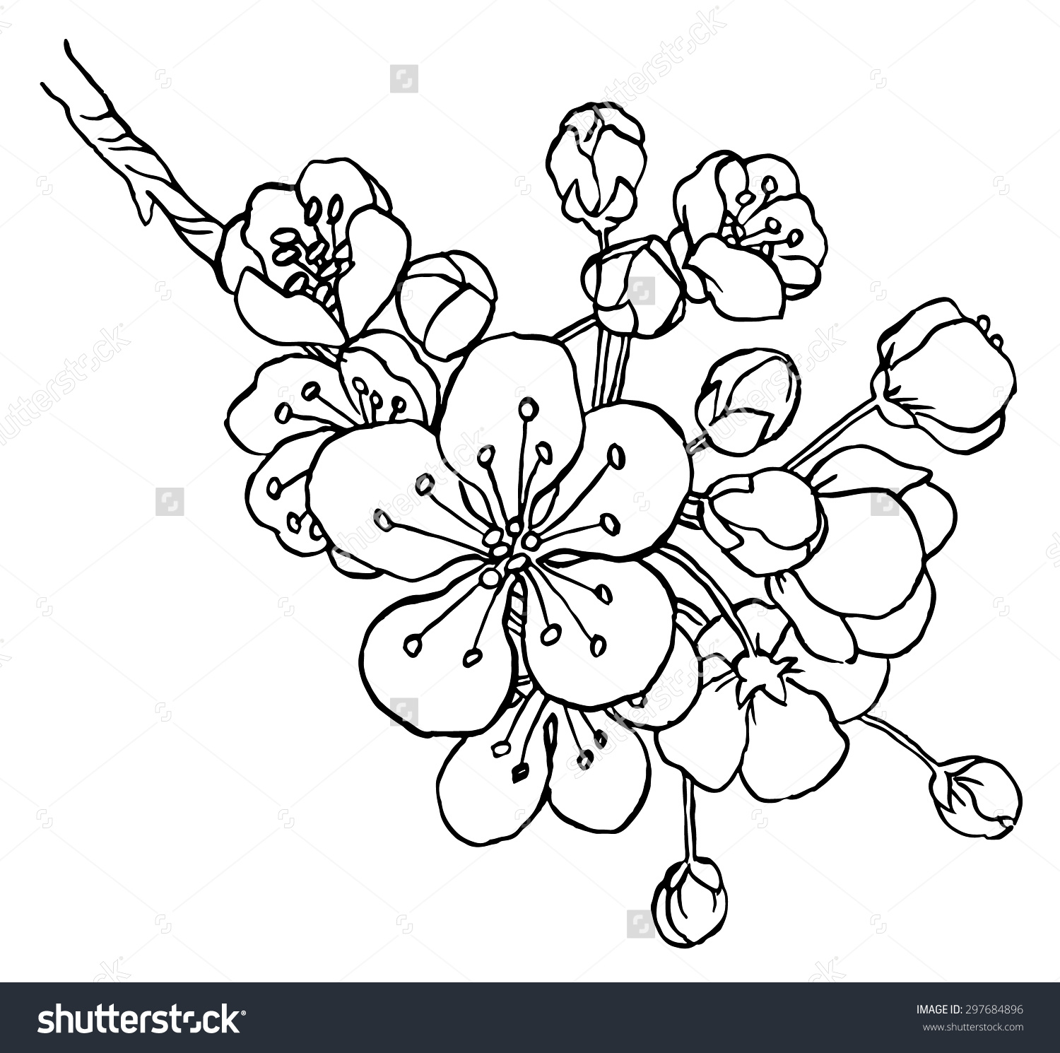 1500x1490 Stock Vector Hand Drawing Apple Tree Branch In Blossom Line Art