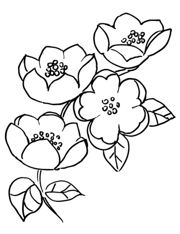 371x480 Apple Blossom Branch Coloring Page Free Printable Coloring Pages