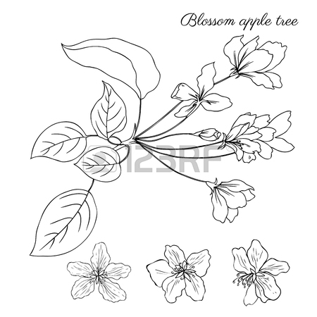 450x450 Apple Blossom Flower Vector Colorful Doodle Sketch Hand Drawn
