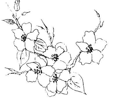 400x348 Apple Blossoms