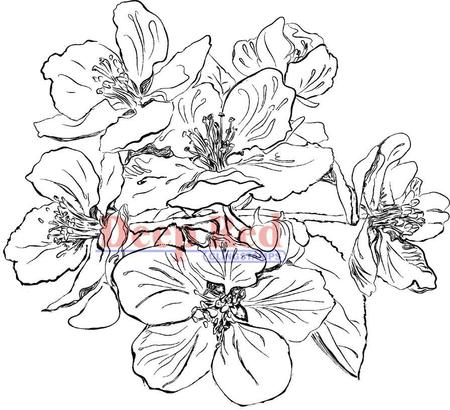 450x410 Deep Red Stamps Apple Blossom Flowers