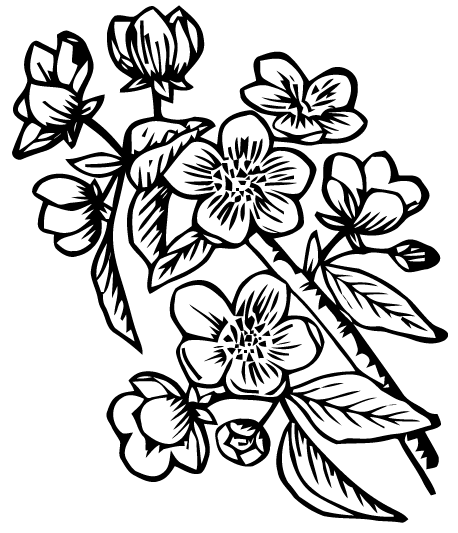 458x533 Free Vector Art Apple Blossoms Images
