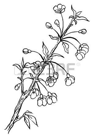 307x450 Hand Drawing Apple Tree Branch In Blossom Line Art Isolated
