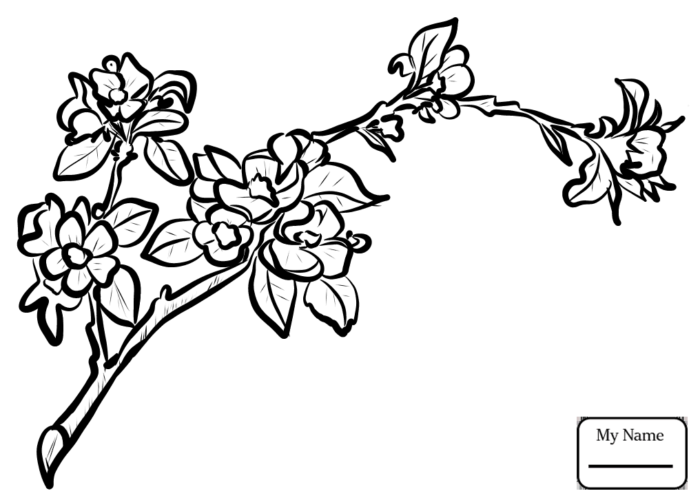 1016x726 Coloring Pages Apple Tree Apple Blossom Branch Trees Leaves
