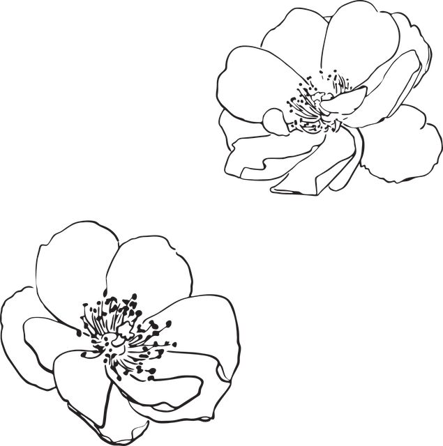 Blossom Flower Line Drawing : Blossom flower line drawing flowers healthy